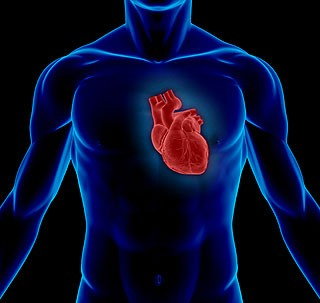 Why having a low resting heart rate is so important?