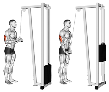 » standing cable triceps extension